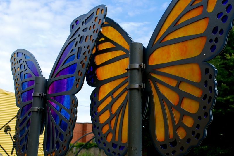 Skywatch_Butterflies