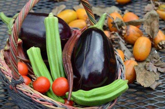 Autumn veggies