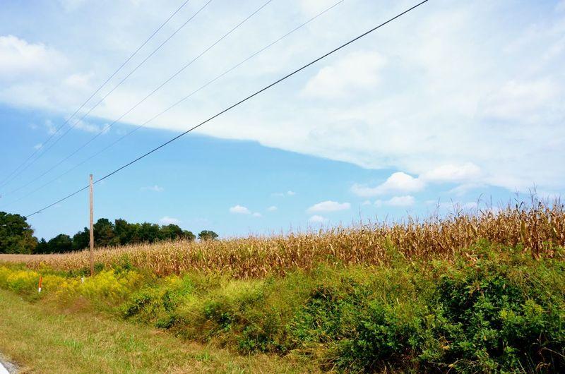 Autumn Knox Road