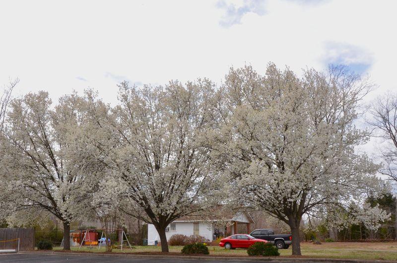 Blossomville