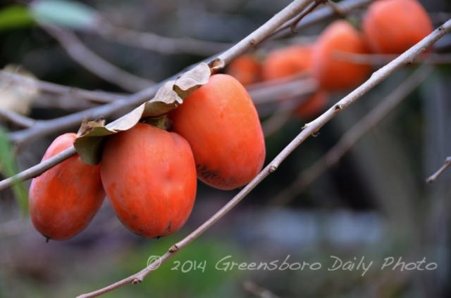 Persimmons-1