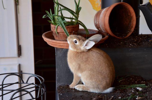 Rabbit - 1 (1)