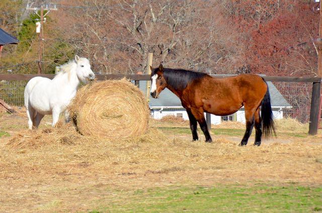 Horses - 1 (1)