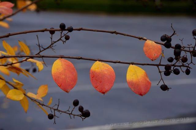 Fall - 1-1