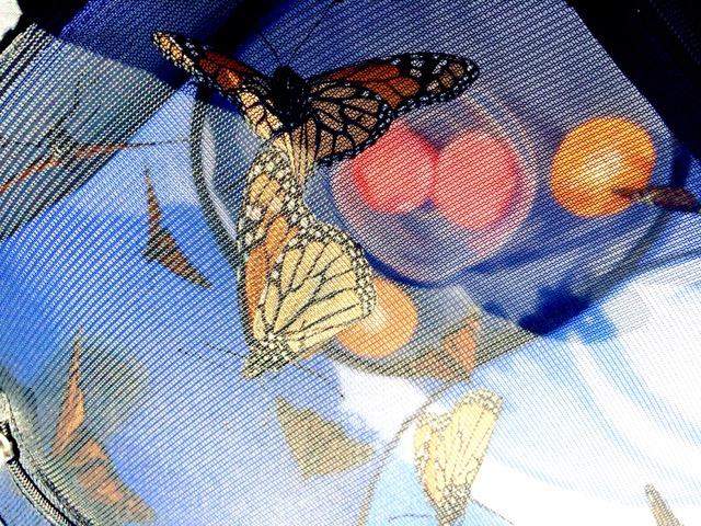 All-A-Flutter - 2