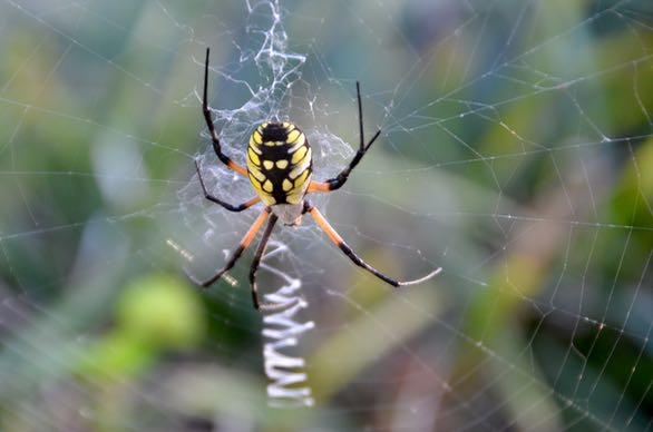 Spider - 1
