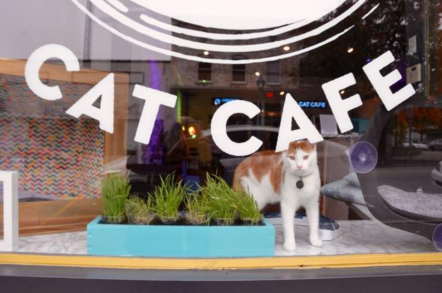 Cat Cafe - 2