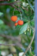Botanical garden - 1