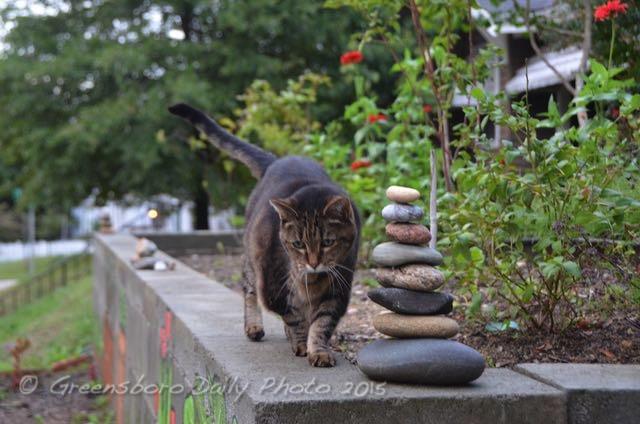 Zen cat - 1-1