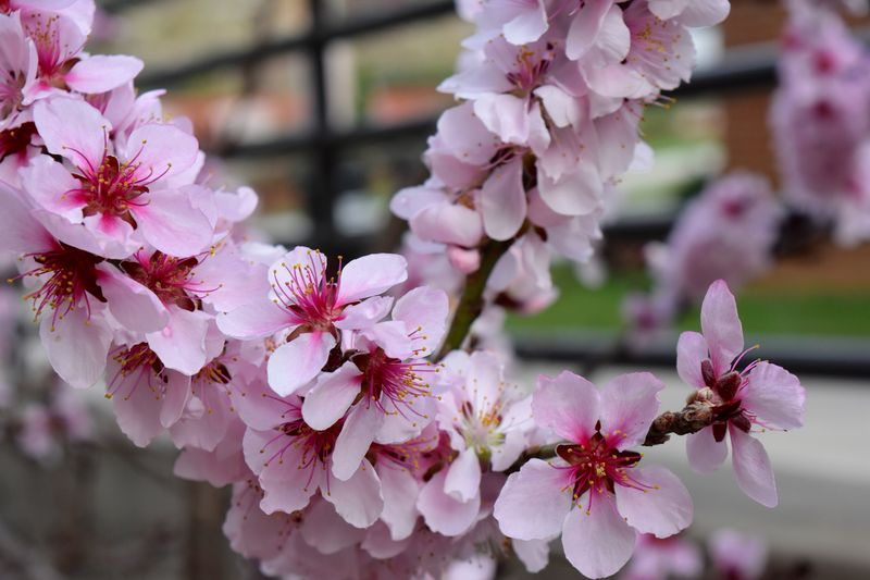 Blossoms - 1