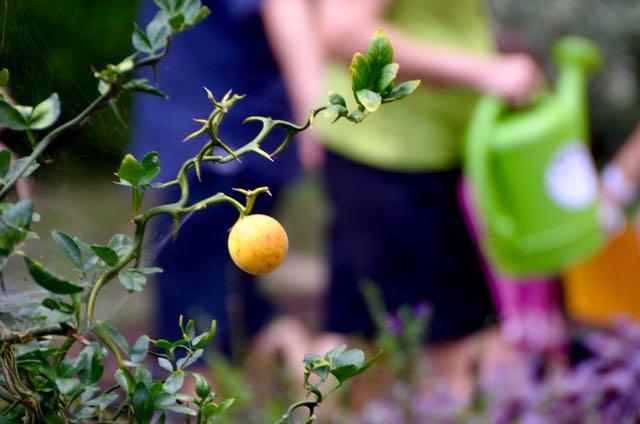 Orange in arboretum - 1