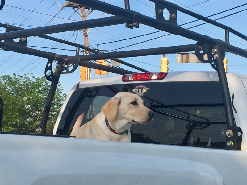 Dog on truck